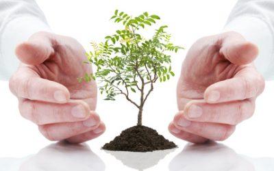 Faire du Reiki sur les plantes
