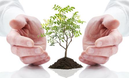 reiki sur les plante